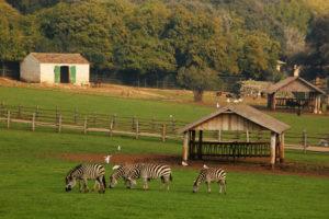 Het safaripark op Veliki Brijuni